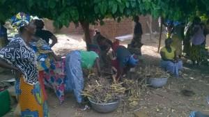 Travail du néré dans une coopérative de femmes du sud ouest du Burkina